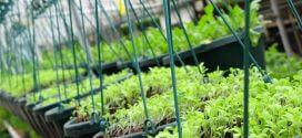 Ứng dụng nano bạc KBO trong trồng trọt chăn nuôi và nuôi trồng thủy sản